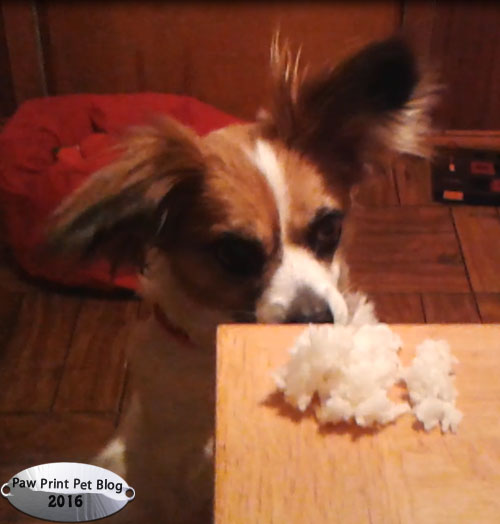 Can Dogs Eat Plain White Rice