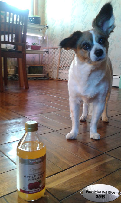 The Benefits of Apple Cider Vinegar for Dogs – Paw Print